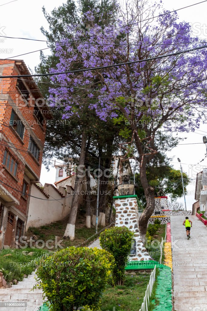 Sucre Bolivia 10192019 Jacaranda Mimosifolia Purple Tree And Urban Staircase At Sucre Capital Of Bolivia Stock Photo Download Image Now Istock