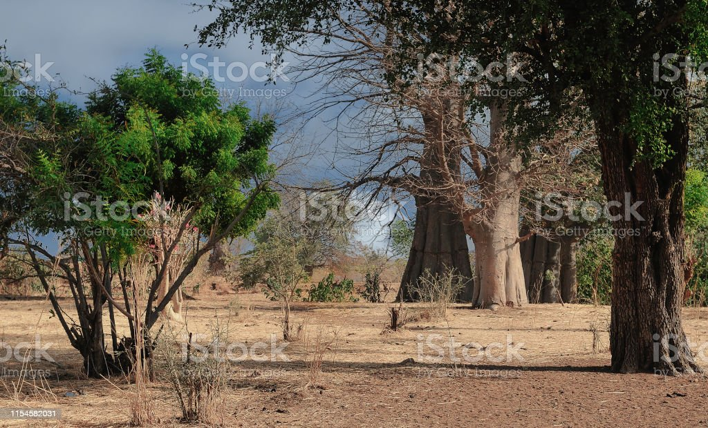 Sudan Landscale of the Sudan Africa Stock Photo