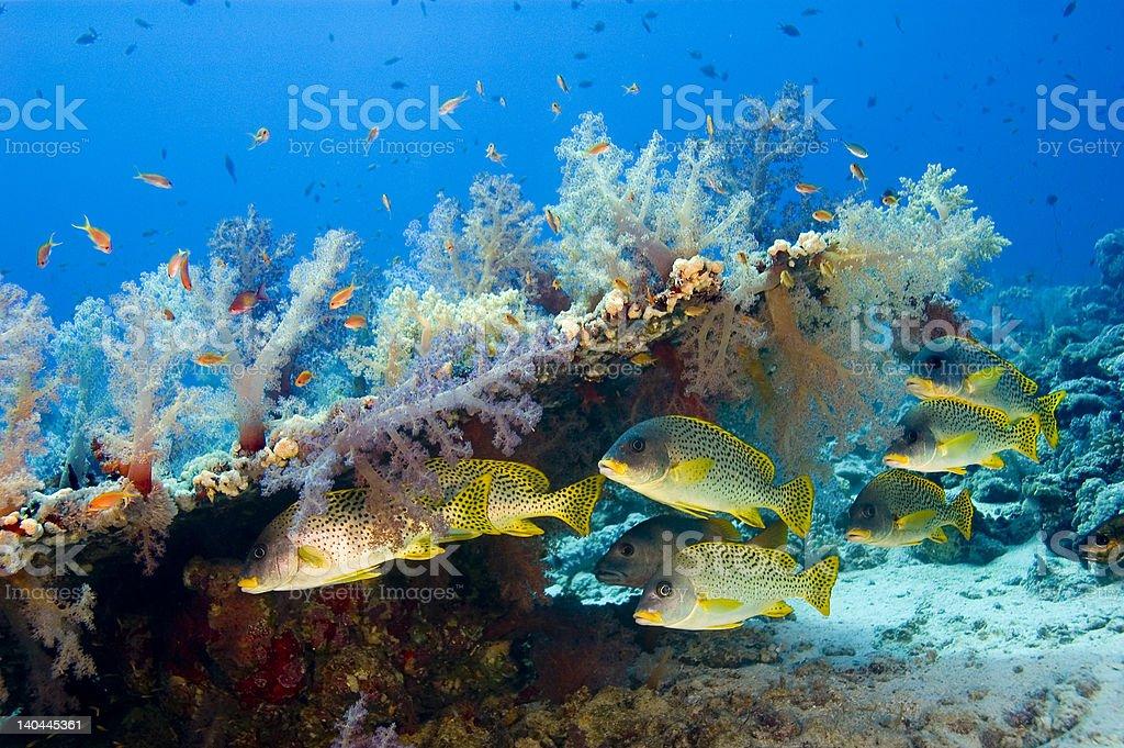 Sudaneese reef stock photo