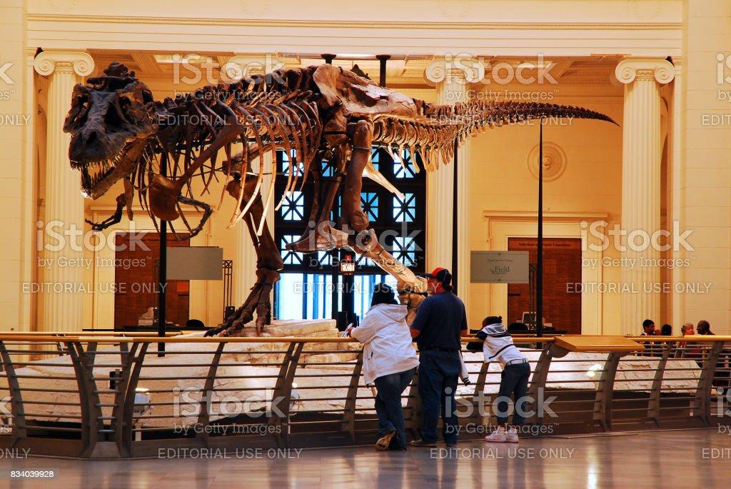フィールド自然史博物館をスーします。 ストックフォト