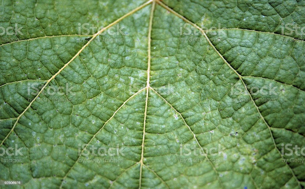 Suede leaf royalty-free stock photo