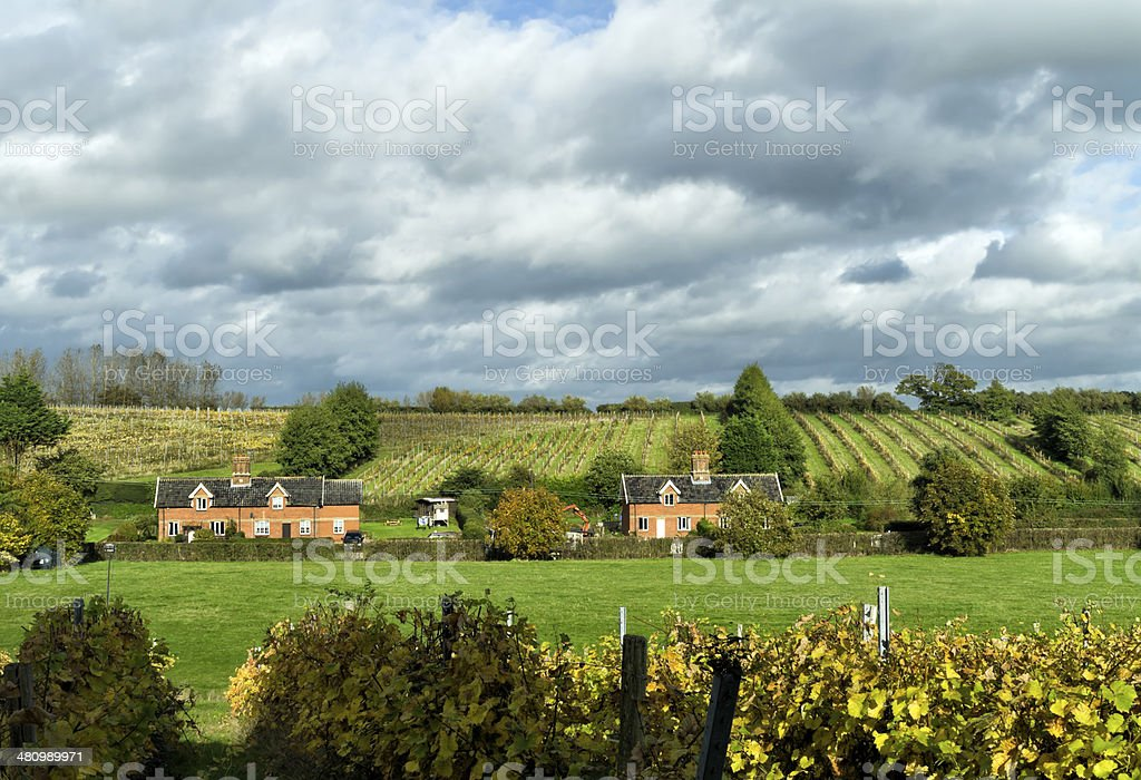 Suffolk vineyards and cottages stock photo