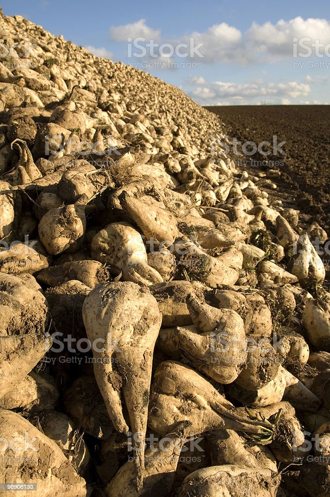 Sugar beet heap royalty-free stock photo