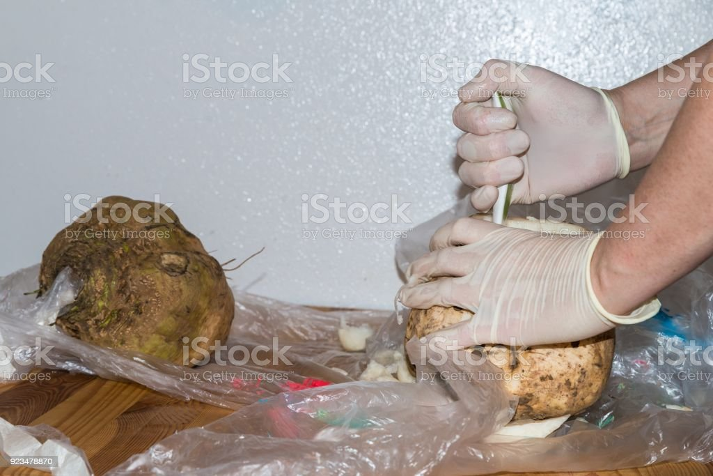 Sugar beet is getting holed stock photo