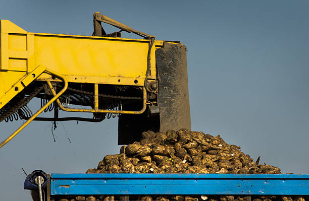 Best Piling Machine Stock Photos, Pictures & Royalty-Free