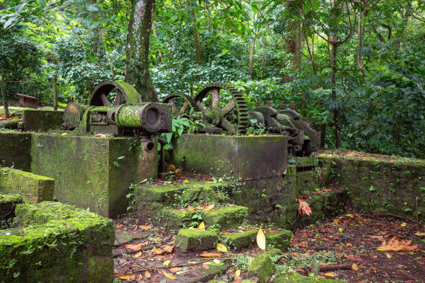 Sugar cane factory ruins in Martinique stock photo