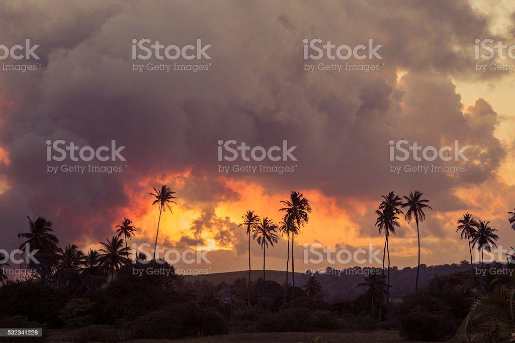 Sugar Cane field burns stock photo