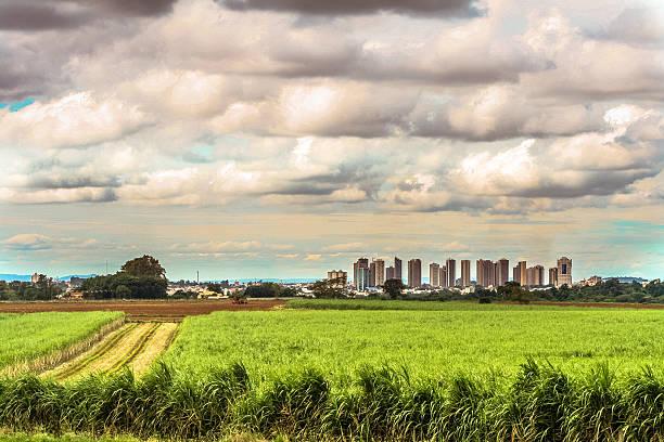 Caña de azúcar Campo - foto de stock