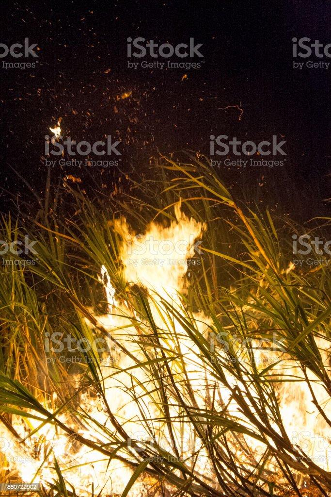 Sugar cane fire stock photo