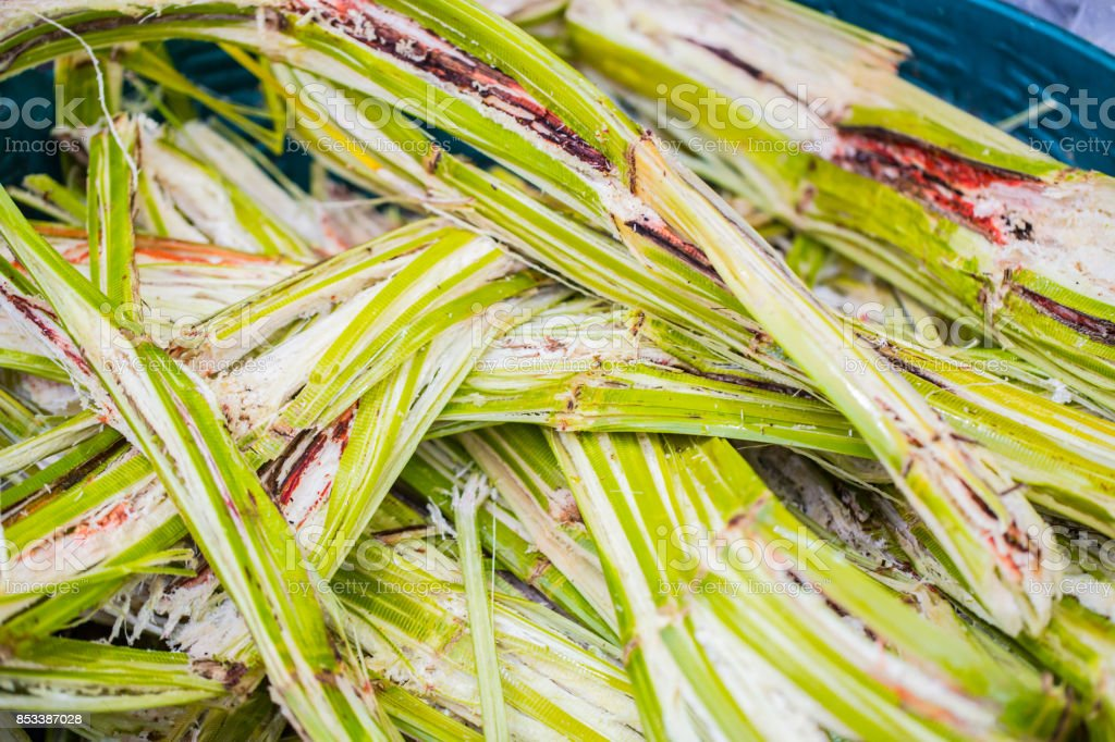 Sugar cane for recycling energy Sugarcane bagasse reuse for nature fiber paper and biofuel recycle fuel ferment materials stock photo