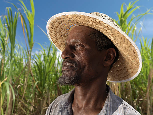 Sugar Cane Harvester – Foto