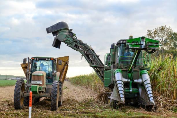 Sugar Cane Harvesting in Louisiana USA stock photo