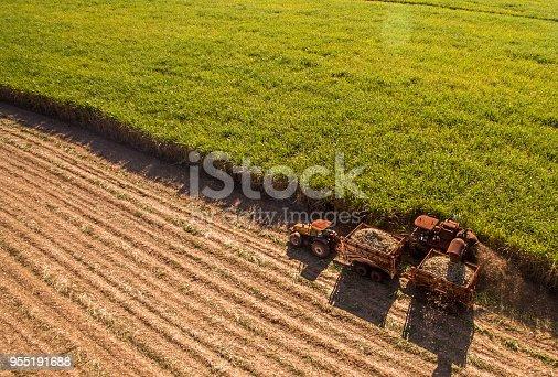 istock Sugar cane hasvest plantation aerial 955191688
