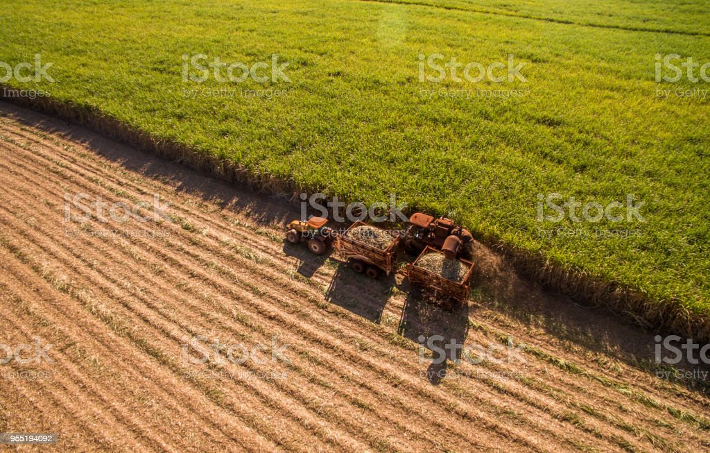 Sugar cane hasvest plantation aerial - Foto stock royalty-free di Agricoltore