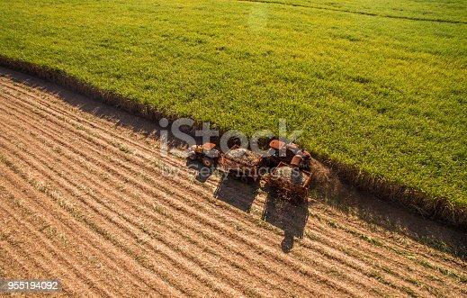 istock Sugar cane hasvest plantation aerial 955194092