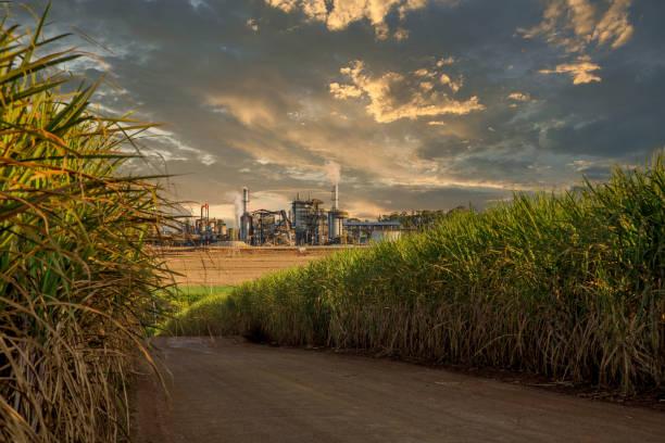 사탕수수 산업 공장 구조 - 제조 공장 뉴스 사진 이미지