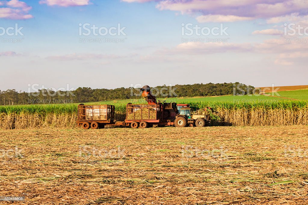 Sugar cane plantation - Tractor and combine harvesting stock photo