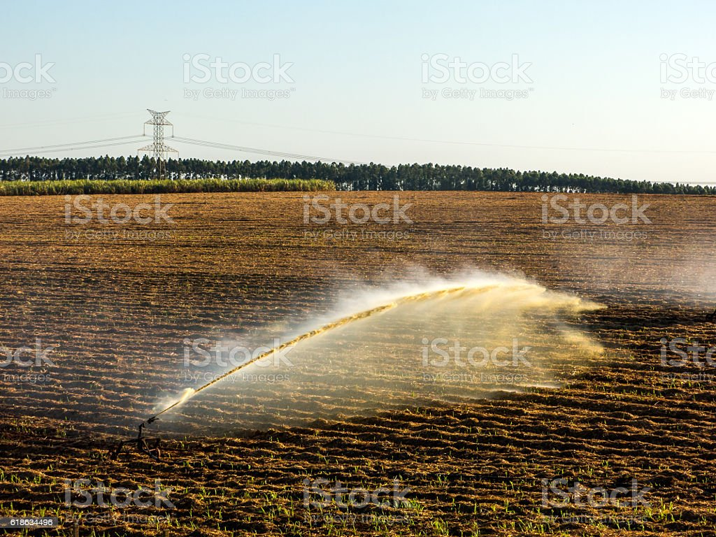 Sugar cane planting irrigation in Brazil stock photo