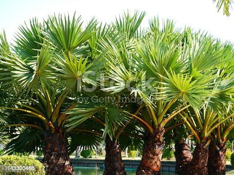 Clear Sky, Cloud - Sky, Formal Garden, Palm Tree, Thailand