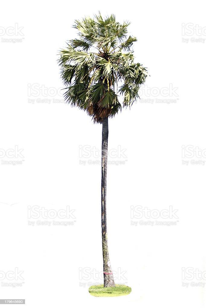 Sugar palm on white background. royalty-free stock photo