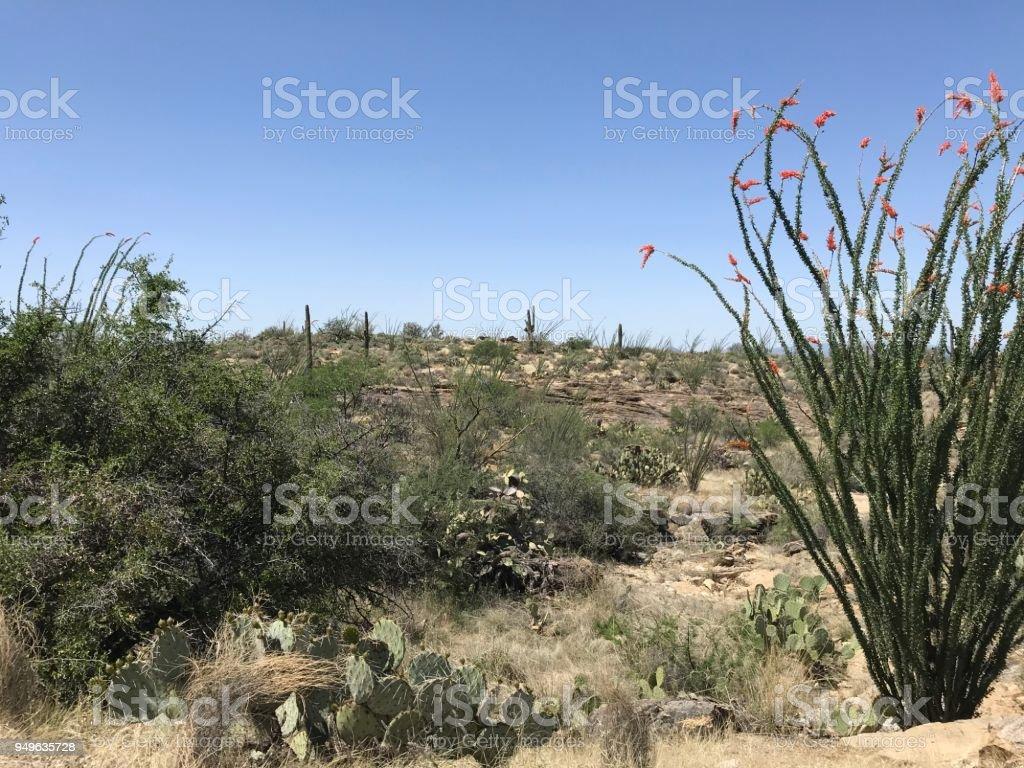 Suguaro National Park stock photo