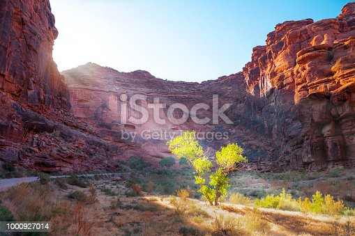 Sunbeams stream into the Sulphur River canyon near Torrey, Utah, highlighting a cottonwood tree and cliffs above.
