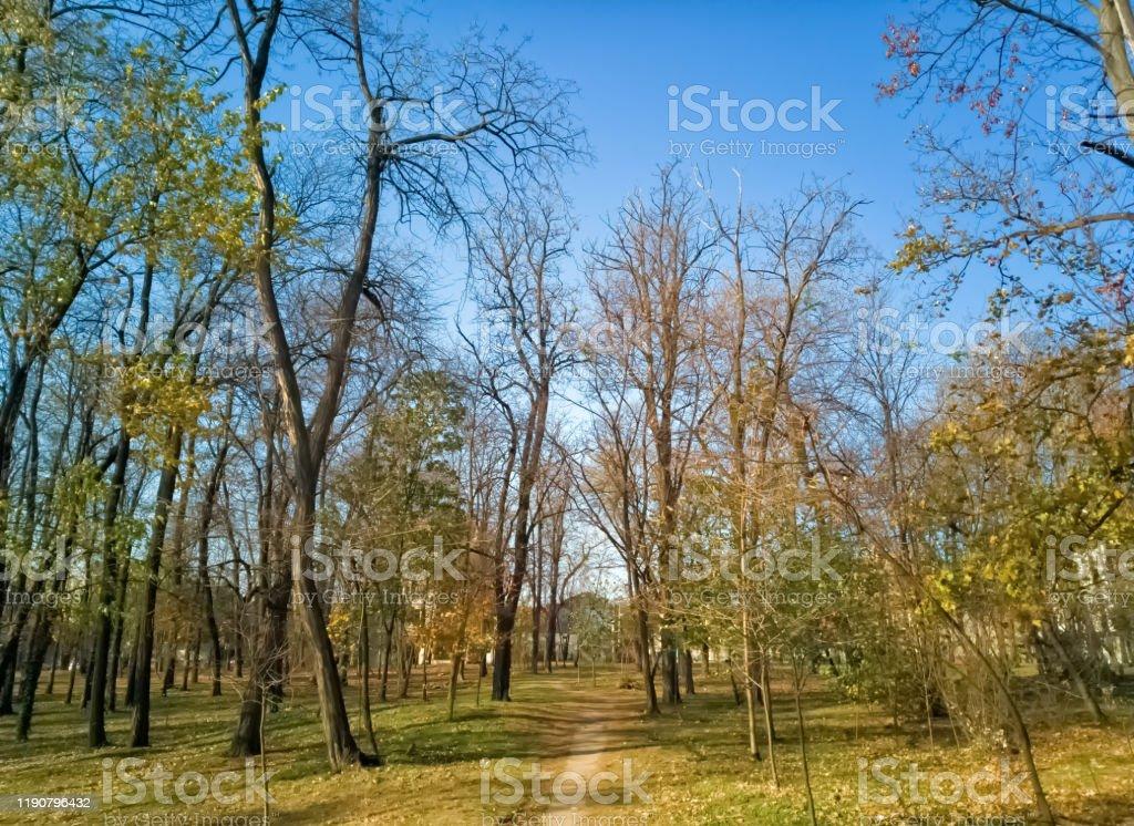 Sumice, Vozdovac, Belgrade, Serbia - november 25th, 2019: earth footpath surrounded by tall trees Sumice, Vozdovac, Belgrade, Serbia - november 25, 2019: earth footpath surrounded by tall trees Abstract Stock Photo