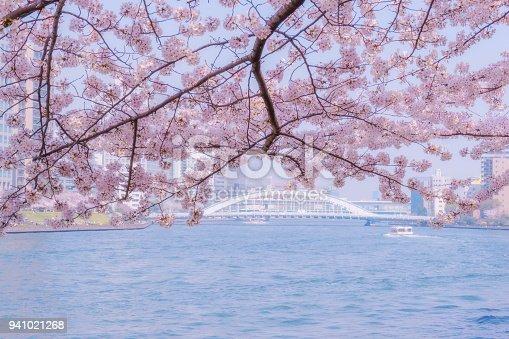 660303034 istock photo Sumida Rivier and Cherry Blossoms 941021268