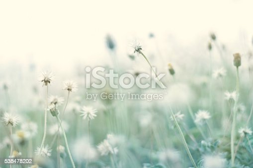 1135260918 istock photo Summer abstract pastel color nature background with dry flower 538478202