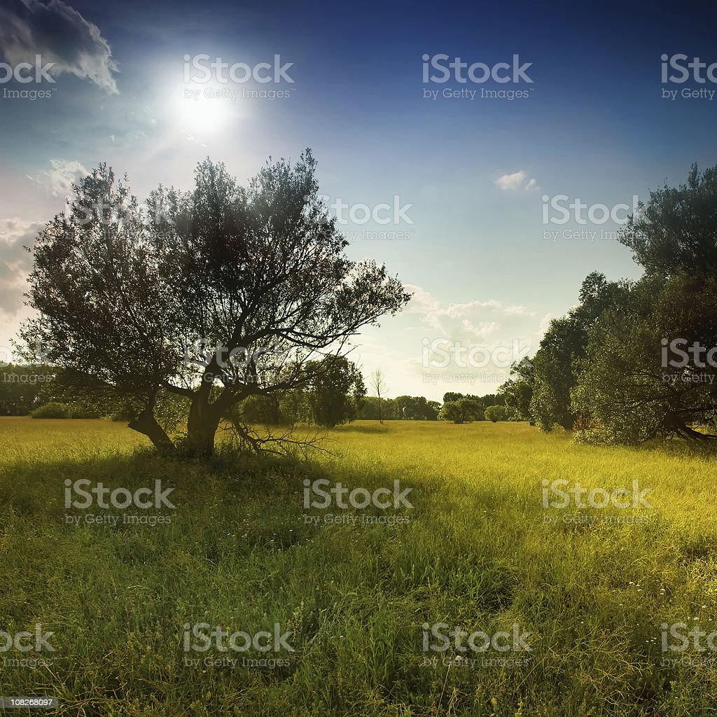 Summer afternoon royalty-free stock photo