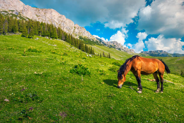 Summer alpine landscape with mountains and grazing horse, Carpathians, Romania stock photo