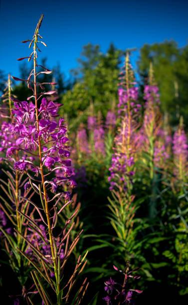 Verão e flores  - foto de acervo