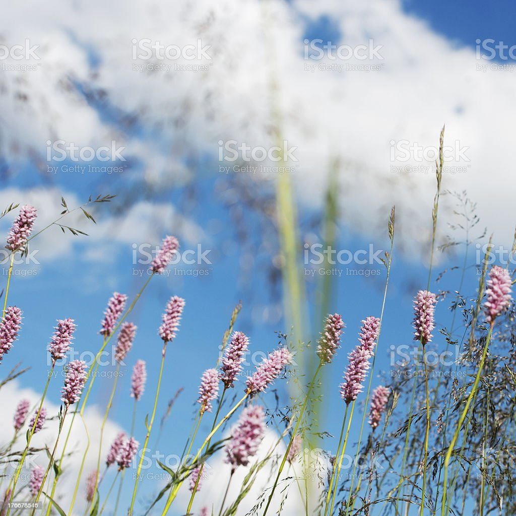 Verano y polígono foto de stock libre de derechos