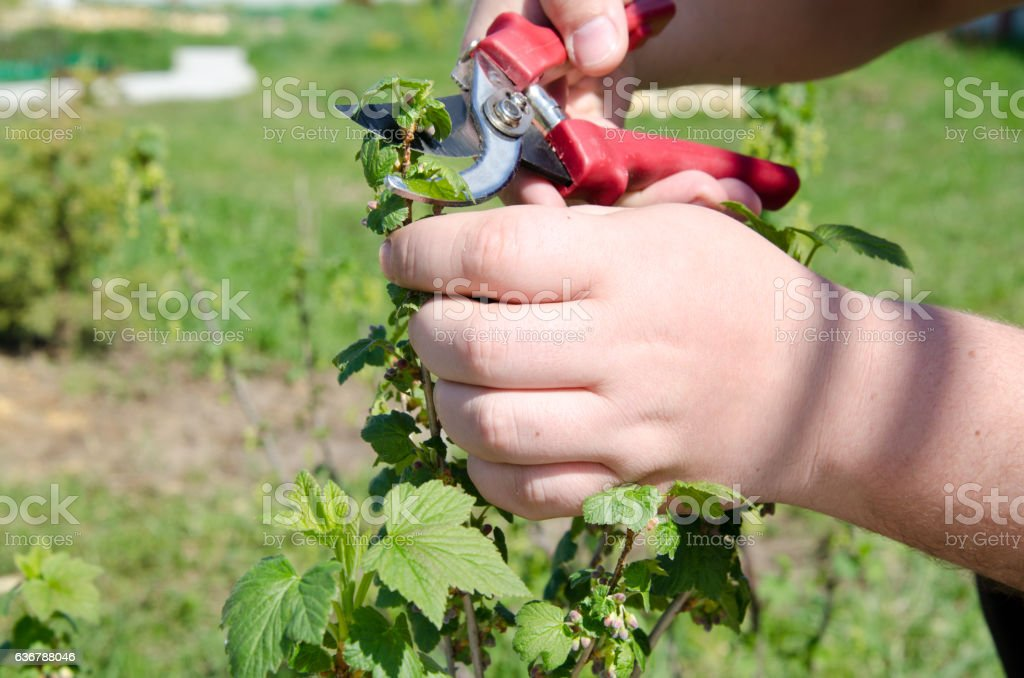 Summer and rural life. stock photo