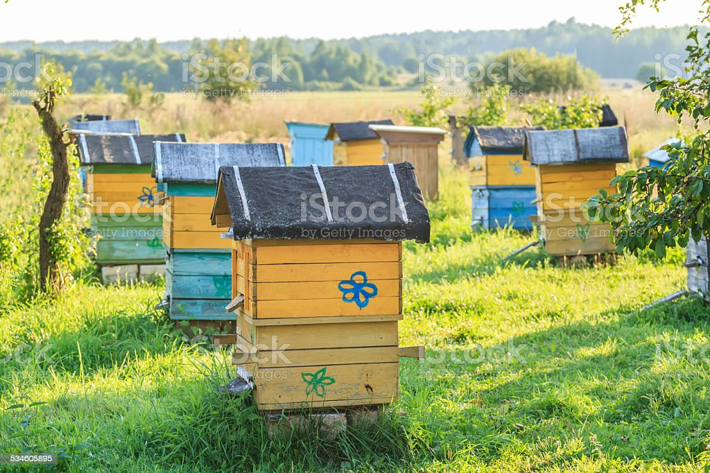 Summer apiary with several hives stock photo