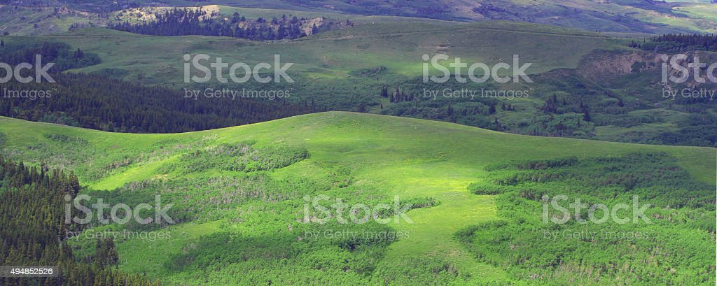 Summer aspen and meadows stock photo
