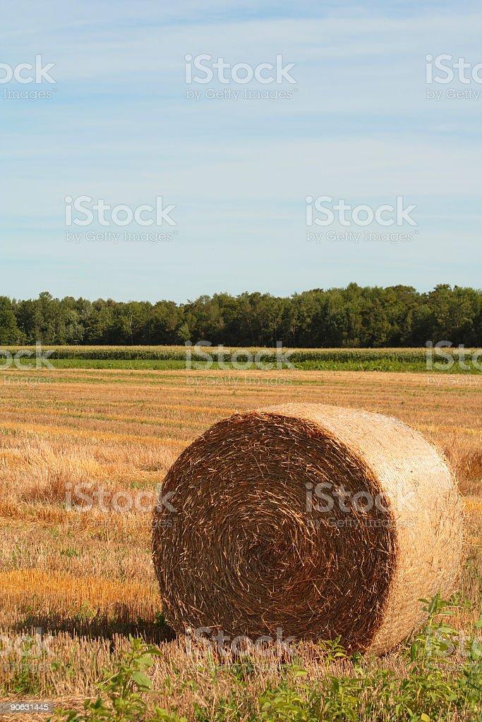 Summer Autumn Hayroll royalty-free stock photo