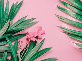 ピンク花を咲かせる熱帯夾竹桃の夏背景コンセプト アレンジ パステル ピンクの背景