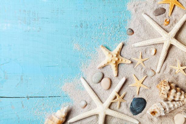 fundo do verão de conchas, estrelas do mar e areia na vista da parte superior de tabela azul. - concha parte do corpo animal - fotografias e filmes do acervo