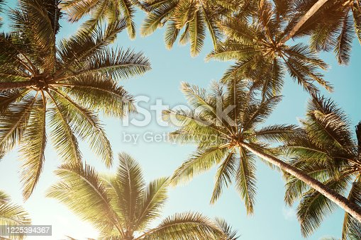 istock Summer background. Low angle view of tropical palm trees over clear blue sky 1225394367