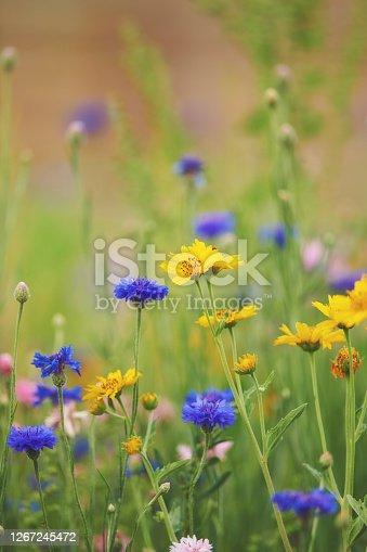 Summer background of wildflower meadow