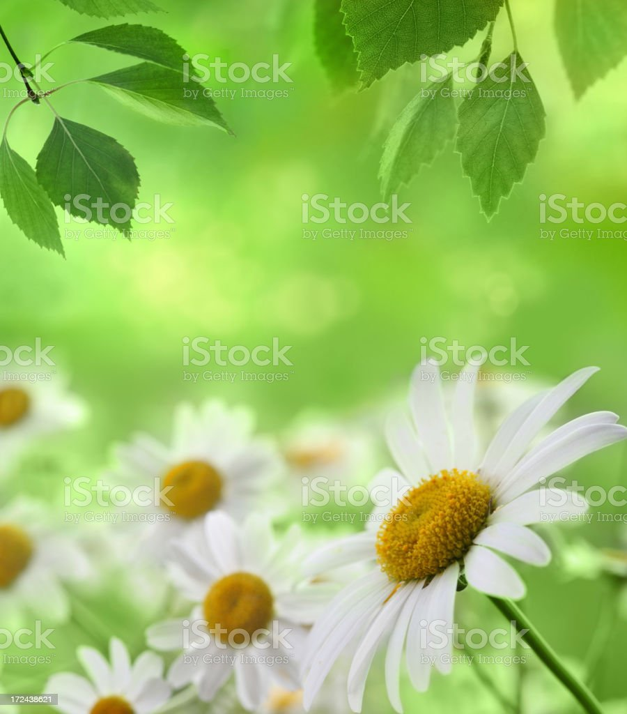 Summer Background royalty-free stock photo