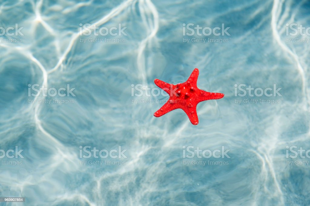 Summer background star in crystal clear water - Royalty-free Animal Stock Photo