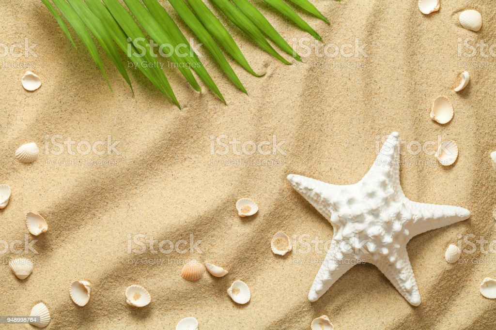 Summer Background with Green Palm Leaf, Starfish and Shells stock photo