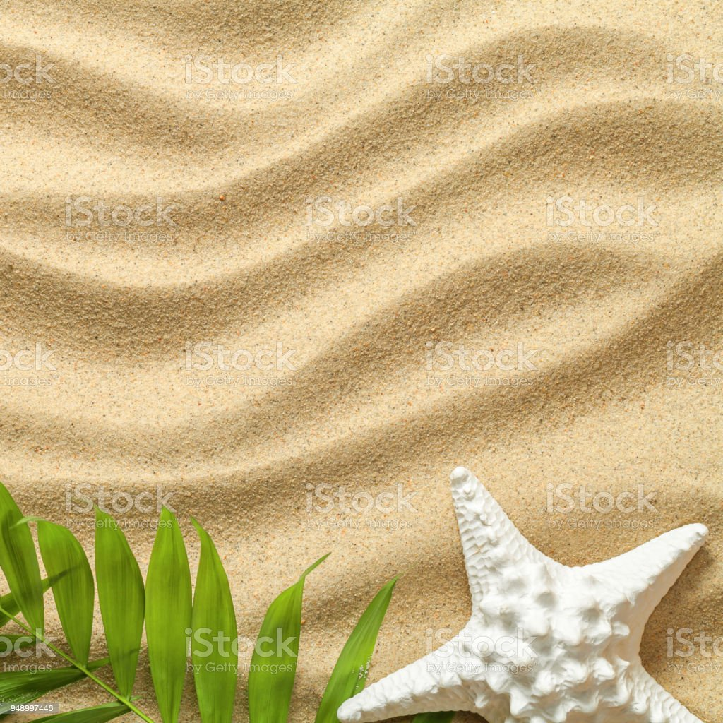 Summer Background with Green Palm Leaves and Starfish stock photo