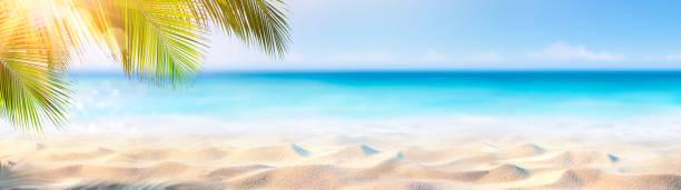 estandarte de verano - arena soleada con hojas de palma en playa tropical - summer background fotografías e imágenes de stock