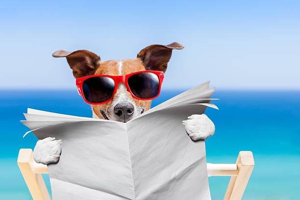 summer beach dog - newspaper beach stockfoto's en -beelden
