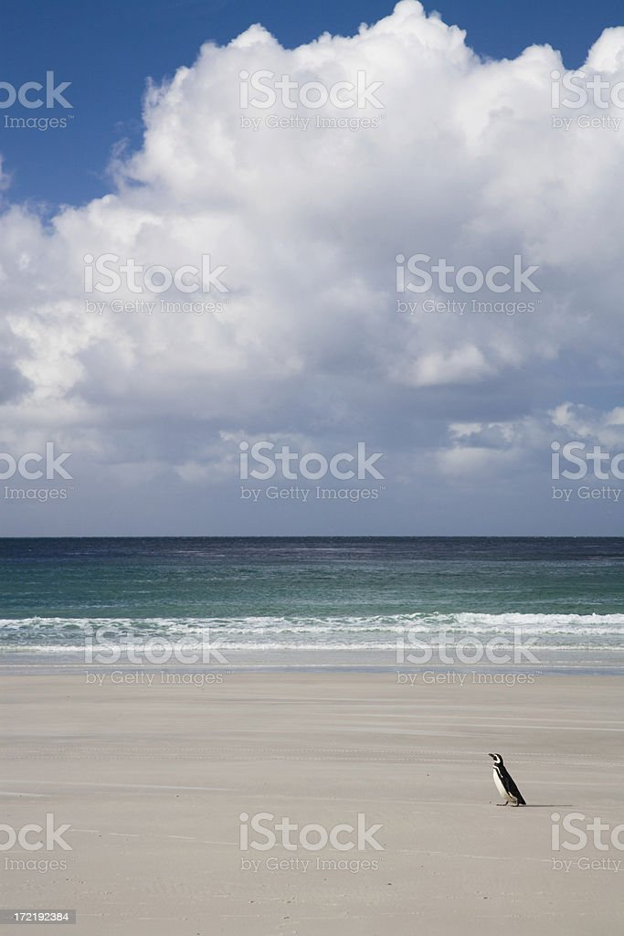 Summer Beach Lonely Penguin royalty-free stock photo