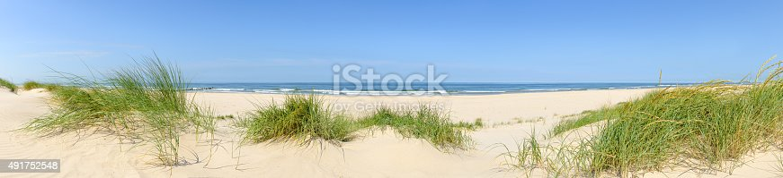 Wide panorama of dune grass at the beach on a beautiful summer day.