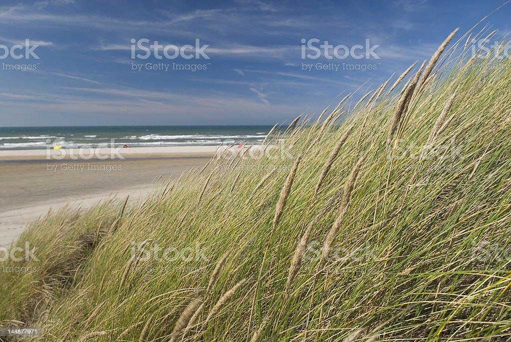 Summer Beach Sand Dunes royalty-free stock photo